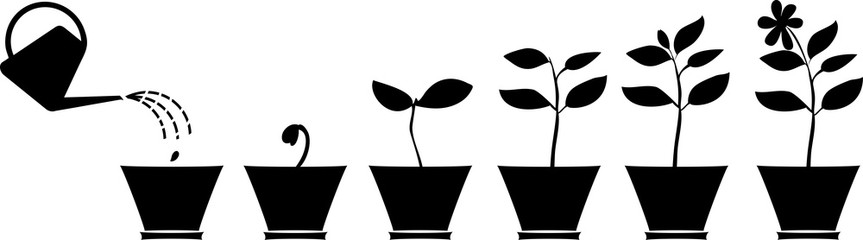 863x240 Search Photos Silhouette Of Plant