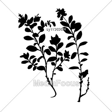 380x379 Silhouette Of The Plant Of The Cowberry