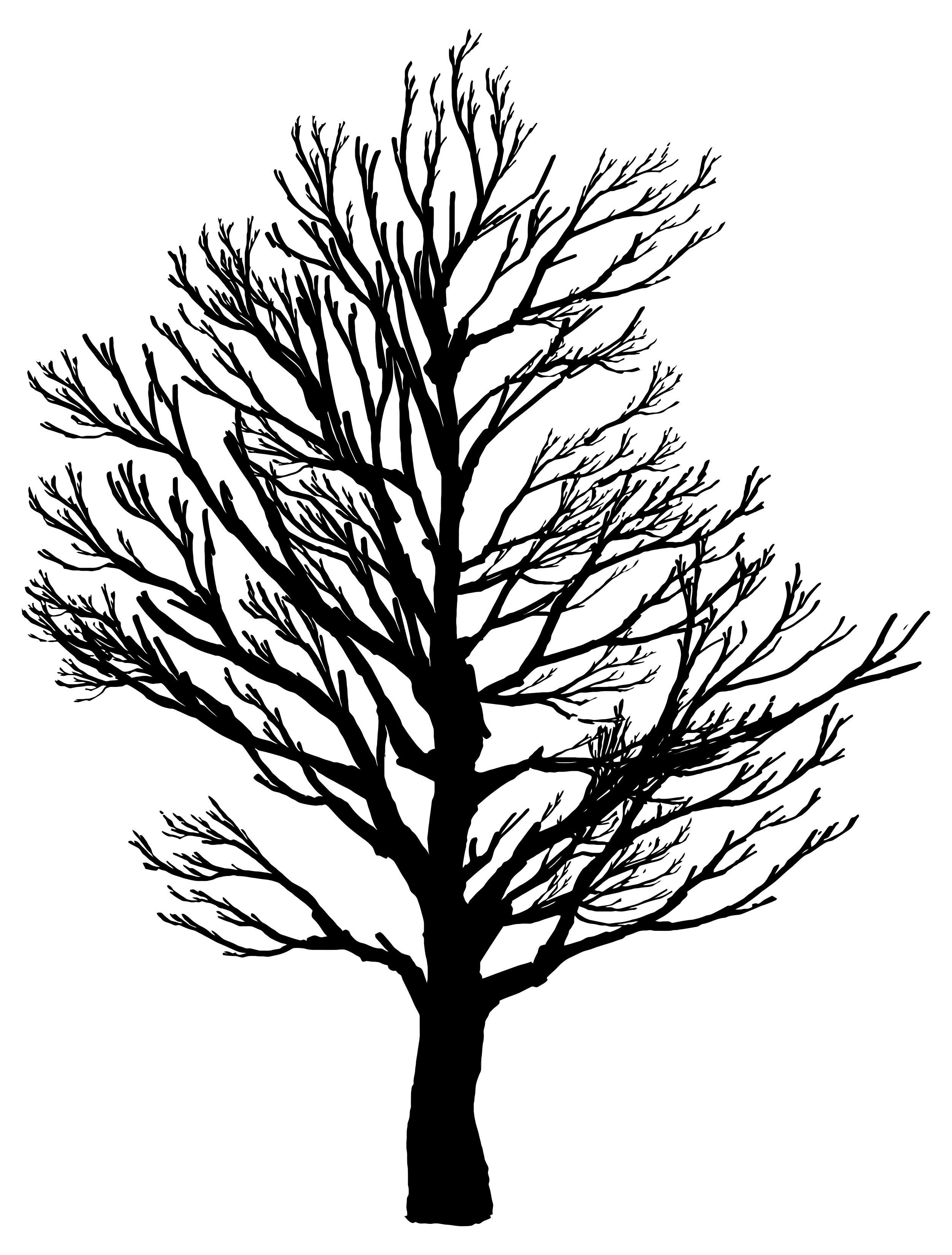 2503x3298 Barren Tree Silhouette 2 Clipart