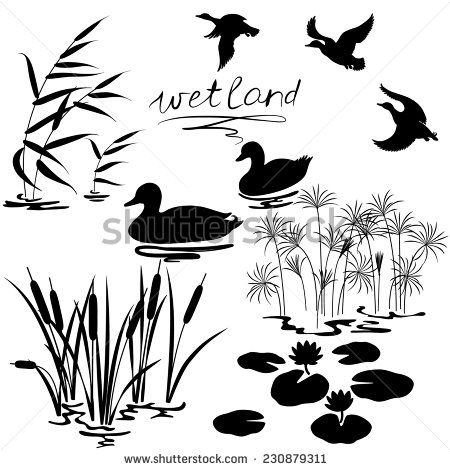 450x470 Set Of Silhouettes Of Water Plants And Ducks.
