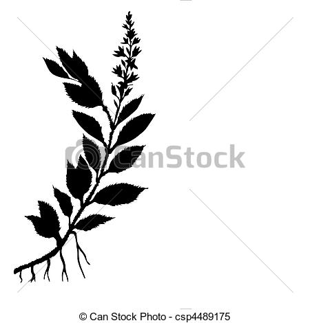 450x470 Vector Silhouette Field Plant On White Background Clipart Vector