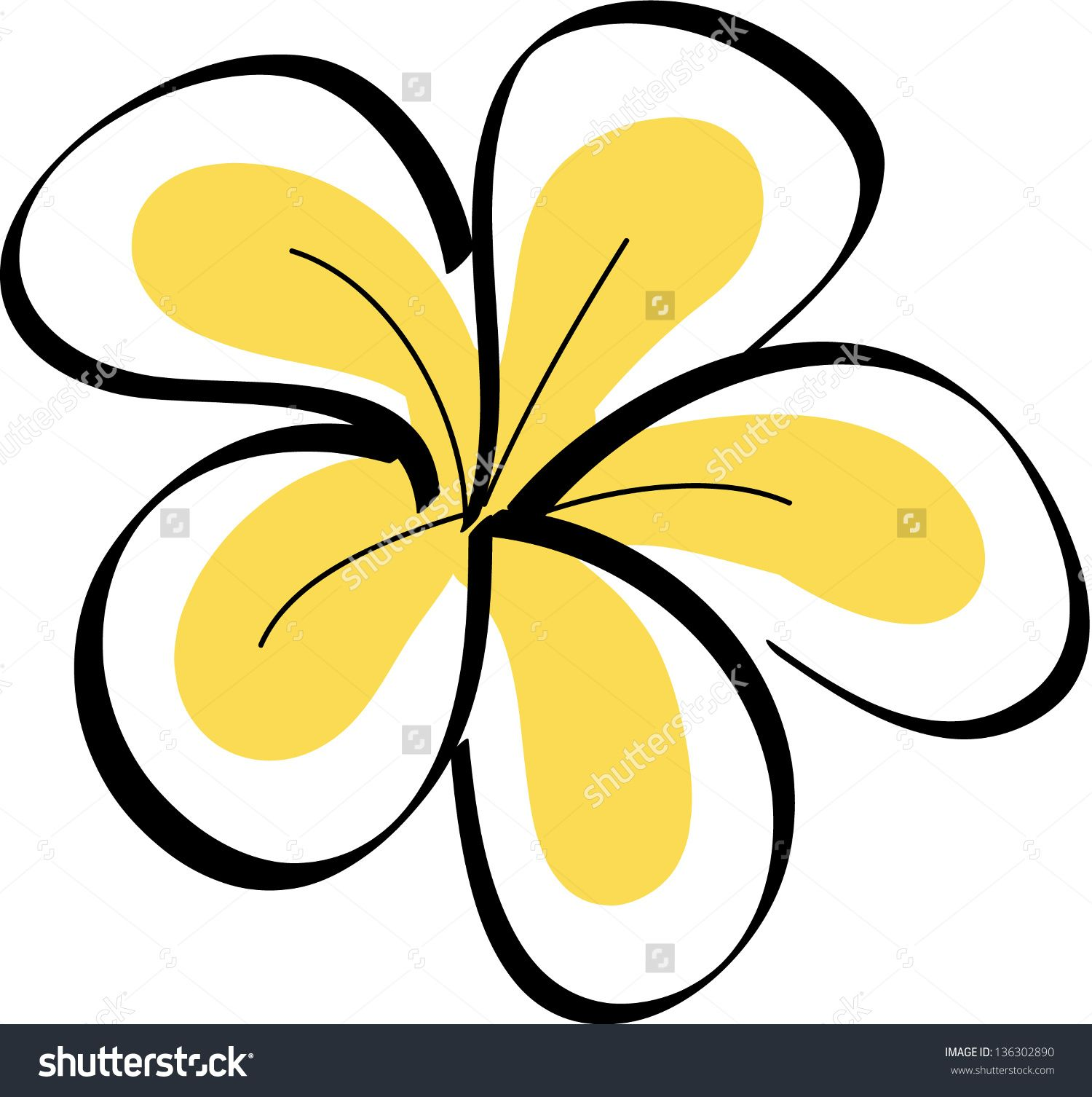 1500x1506 Drawing Tropical Plumeria Flowers Vector Preview. Save
