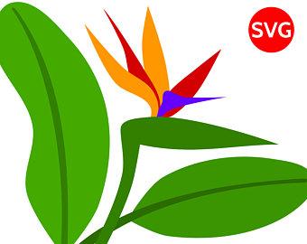 340x270 3 Plumeria Tropical Flower Svg Files For Cricut Silhouette