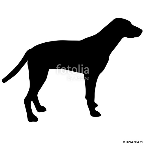 500x500 Black And White Silhouette Of A Dog. Pointer Or Pinscher. Stock