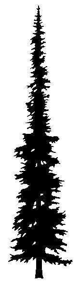 166x600 Ponderosa Pine Tree Silhouette