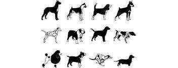 352x135 Poodle Clip Art, Free Vector Poodle