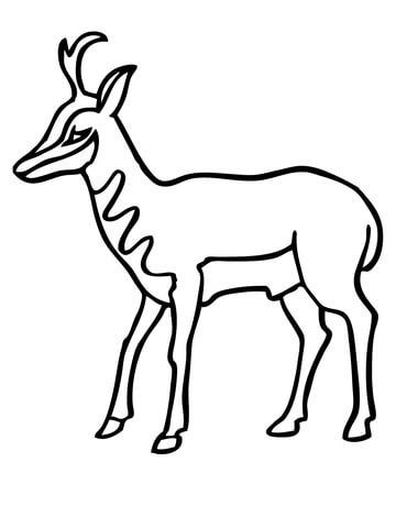 360x480 American Antelope Pronghorn Coloring Page Free Printable