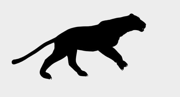 Puma Silhouette