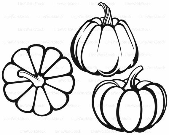 570x456 Pumpkins Svgclipartvegetables Svgpumpkins Silhouettepumpkins