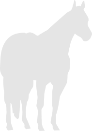190x269 Quarter Horse Silhouette Stock Horse Silhouette By Cvance35