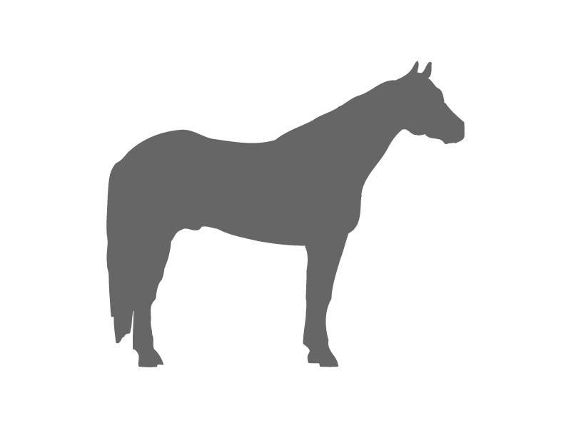 800x600 Quarter Horse Stencil