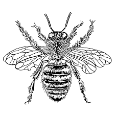 225x225 Image Result For Bee Drawing Images Bees Bee Drawing