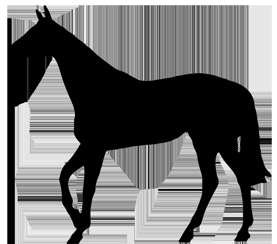 1063x936 Horse Black Silhouette Do's Amp Don'Ts Silhouette