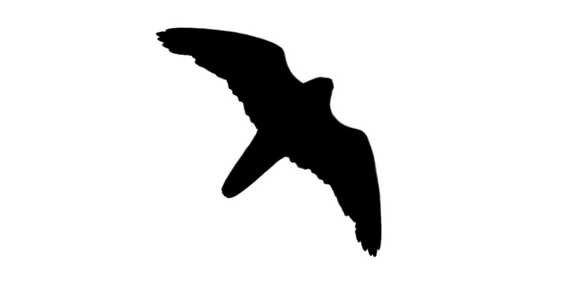 1162x576 Utah Birders Birding Blog, Utah Birds, Utah Birding, Utah Bird