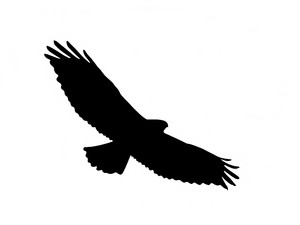 300x225 Raptor Royalty Free Photos And Vectors