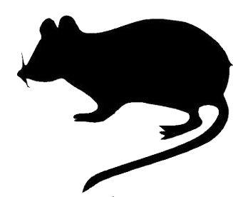 327x276 Rat Silhouette Clip Art Pack Template