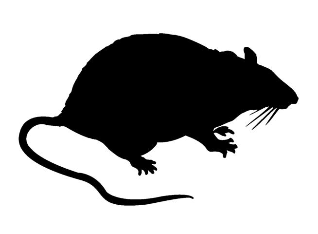 654x480 Rat Silhouette Decal Sticker