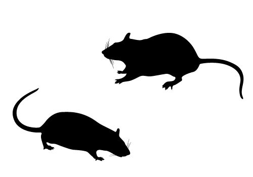 500x350 Rat Silhouette Vector Free Download Silhouette Clip Art