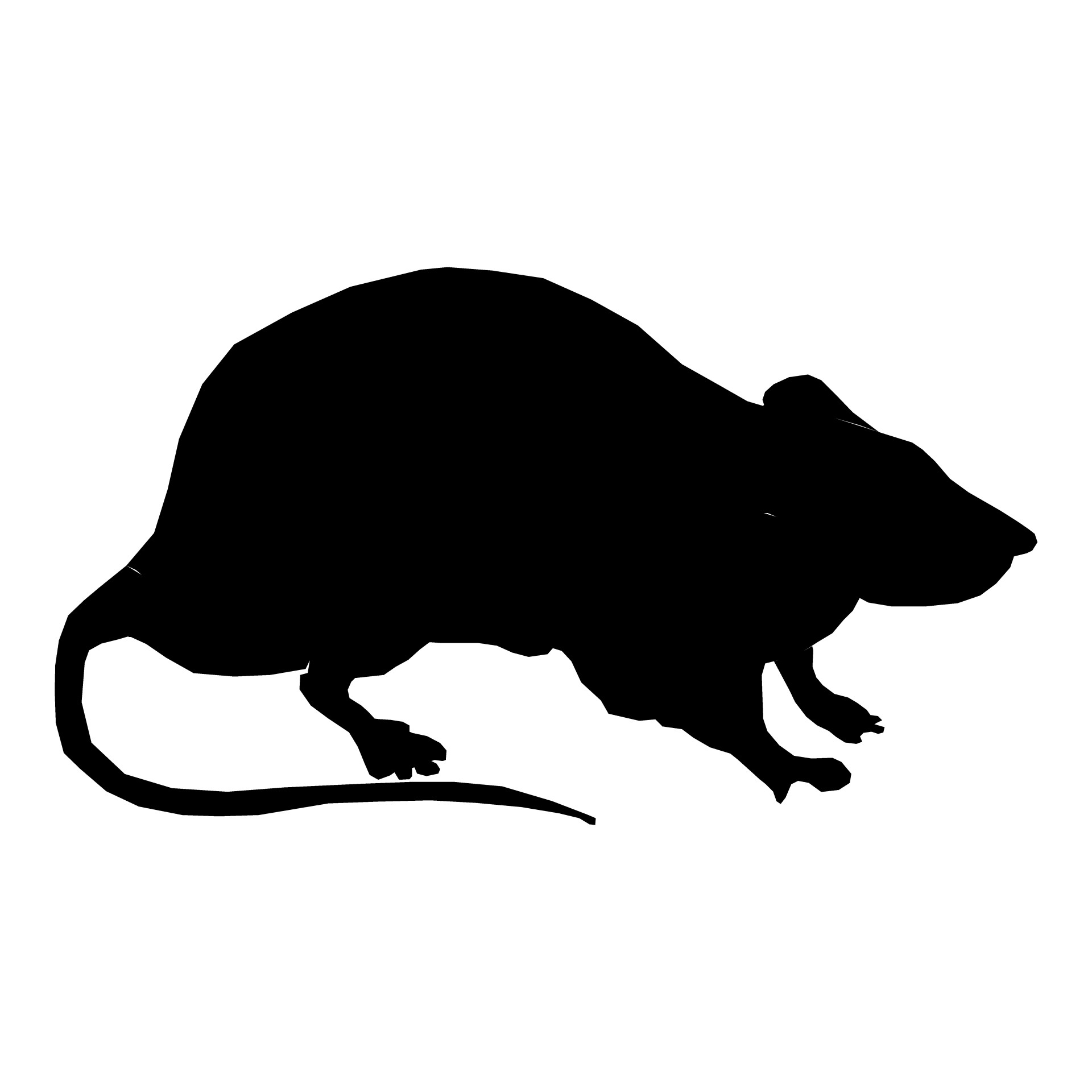 1920x1920 Silhouette Rat Free Stock Photo