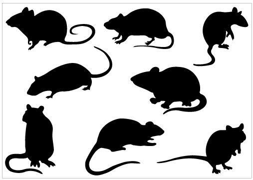 507x360 Clipart Rat