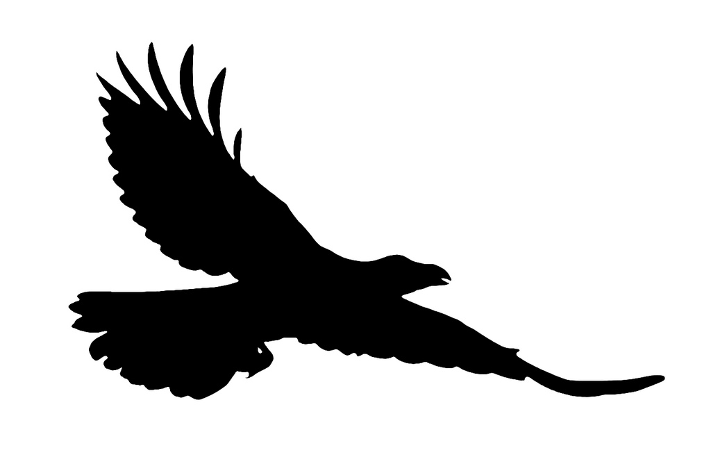 1024x658 Flying Raven Silhouette Only The Silhouette Is Extracted