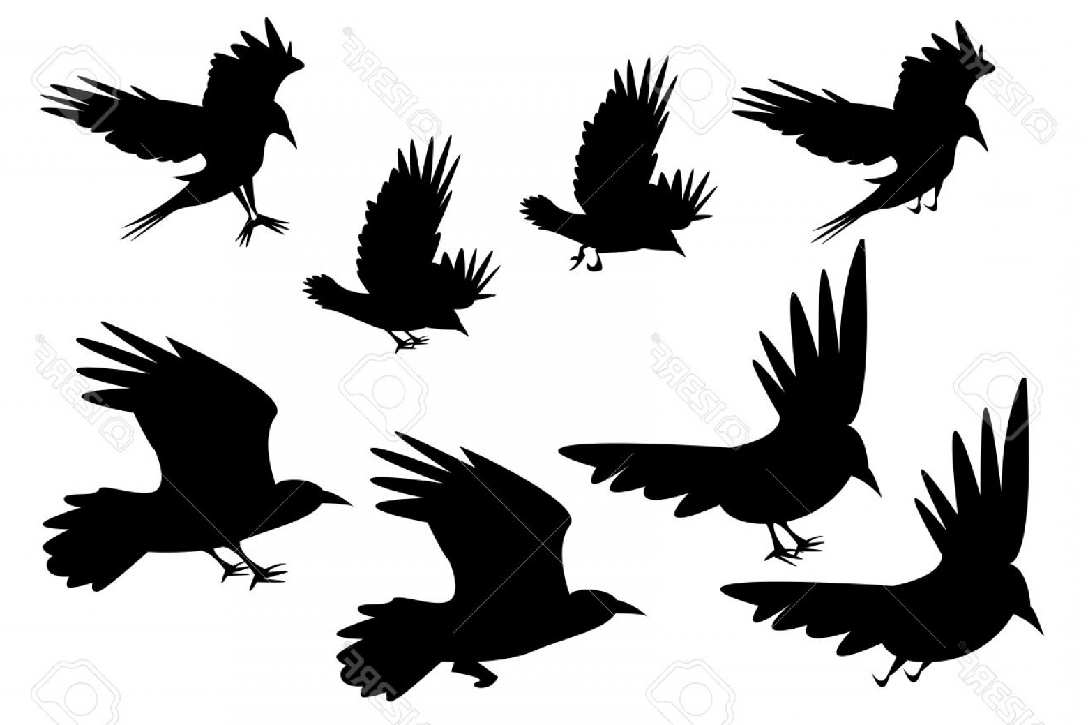 1560x1039 Flying Raven Vector Lazttweet