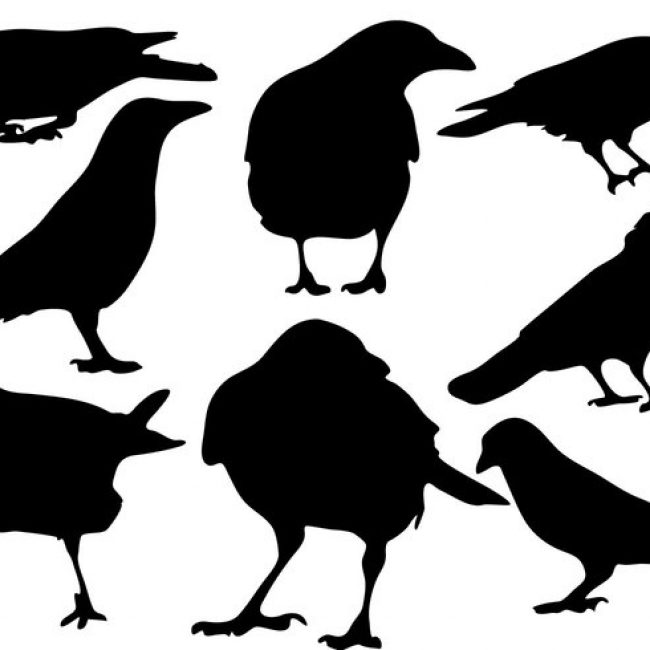 650x650 Free Vector Free Raven Silhouette Vector