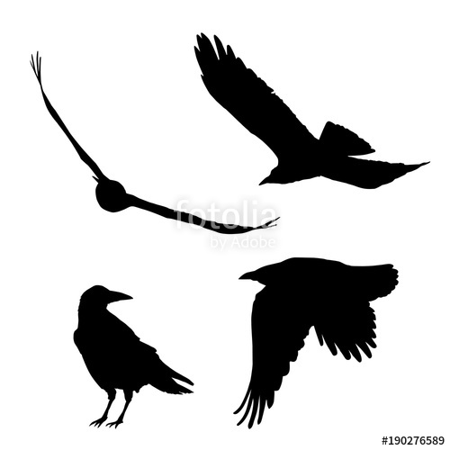 500x500 Set Of Vector Silhouettes Of Ravens Crows Stock Image