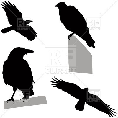 400x400 Silhouettes Of Flying And Sitting Crow (Raven) Royalty Free Vector