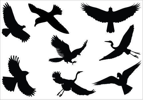 500x350 Birds Flying Silhouette Vector, Eagle, Raven, Sparrow, Crane, Dove