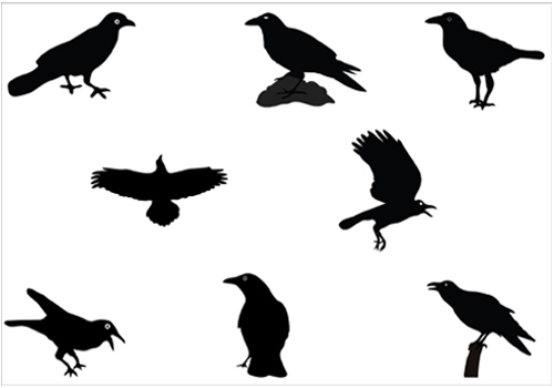 500x350 Raven Silhouette Vector Pack Clipart Panda