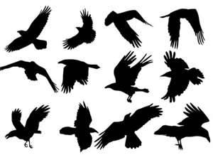 300x218 Flying Ravens Silhouette On Caws Field Raven A Tattoo Raven(S