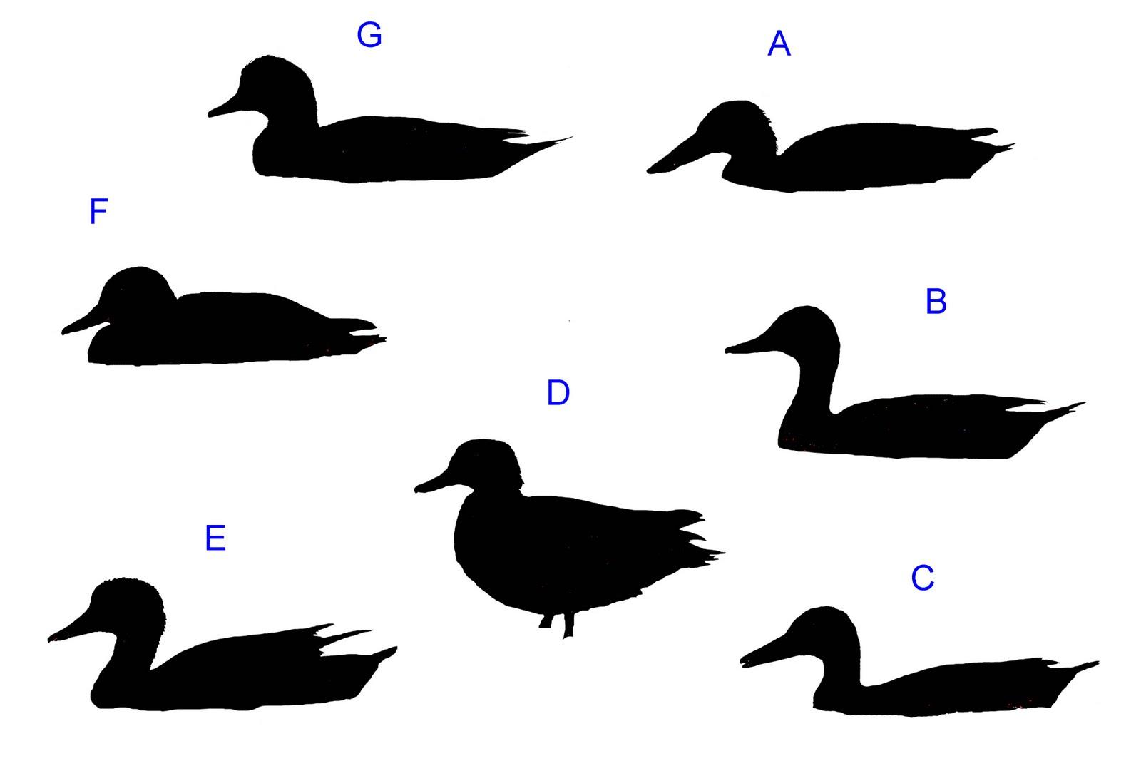 1600x1067 Dabbling Duck Silhouette Quiz Clipart Panda