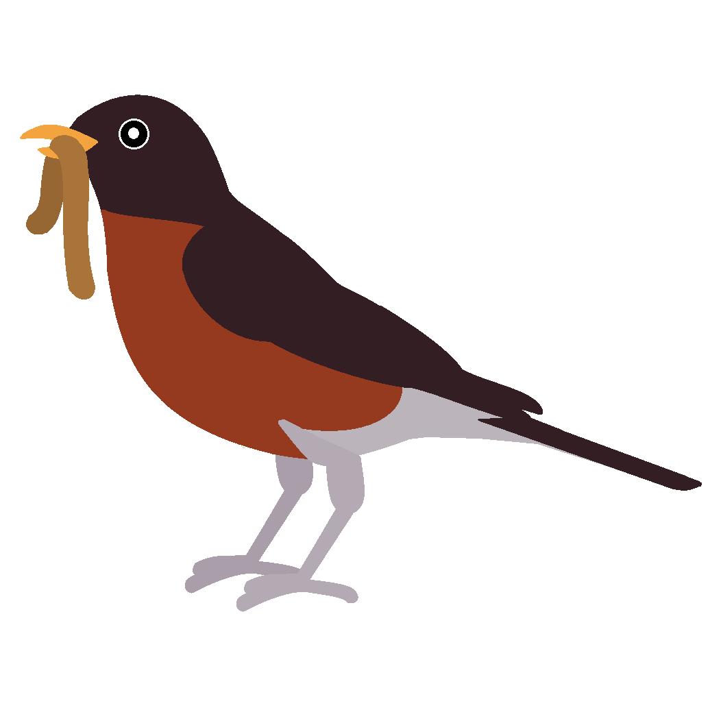 1036x1036 Free Red Bird Clip Art
