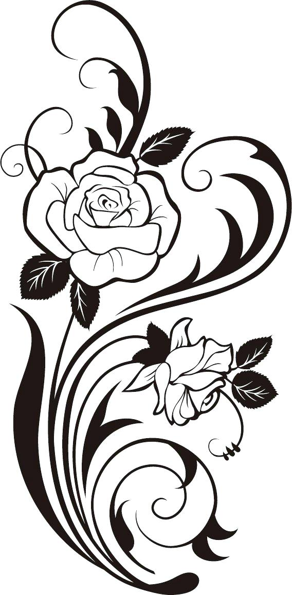 568x1157 Rose For Coloring Rose Coloring Red Rose Coloring Page Rose Images