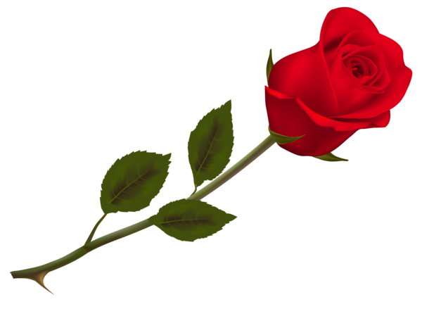 600x439 Transparent Beautiful Red Rose Png Pictureu200b Gallery Yopriceville