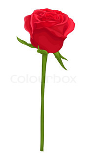 182x320 Beautiful Red Rose Isolated On White. With Watercolor Effect. Hand