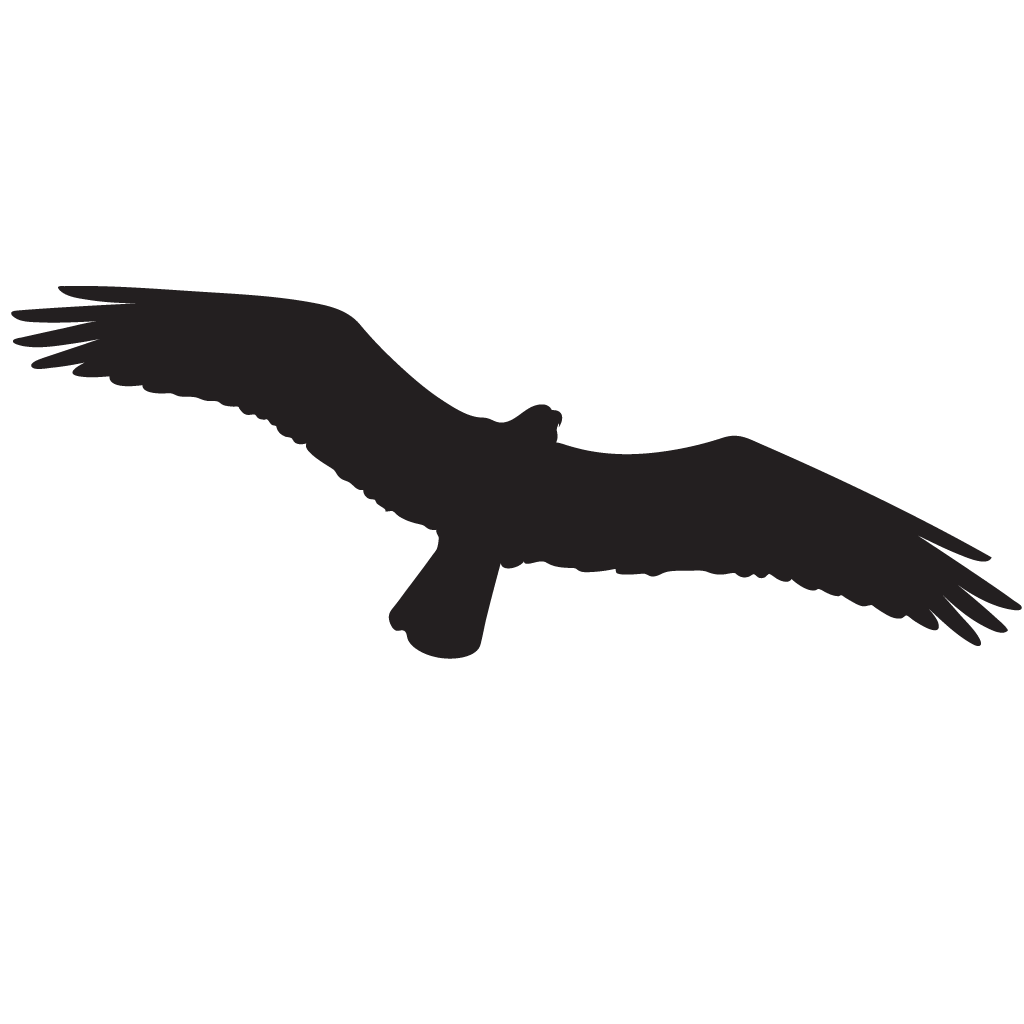 1024x1024 Osprey Overview, All About Birds, Cornell Lab Of Ornithology