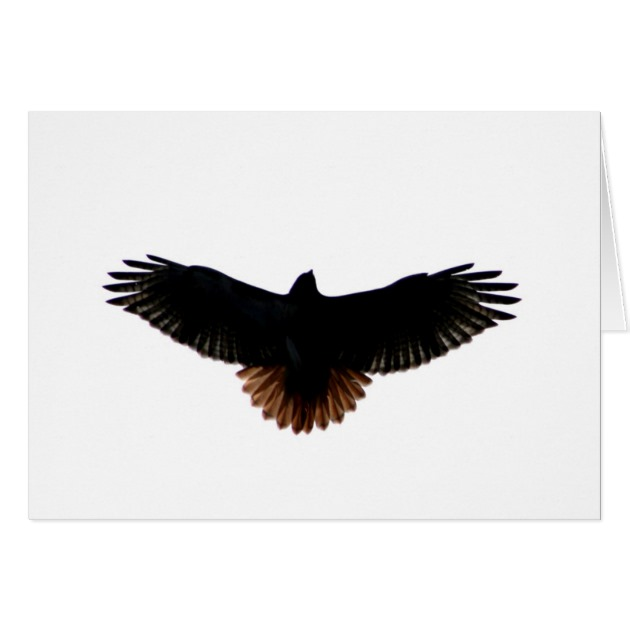630x630 Red Tailed Hawk Card