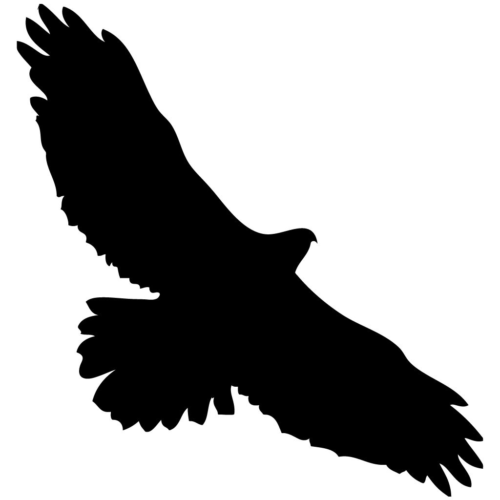 1024x1024 Red Tailed Hawk Overview, All About Birds, Cornell Lab Of Ornithology