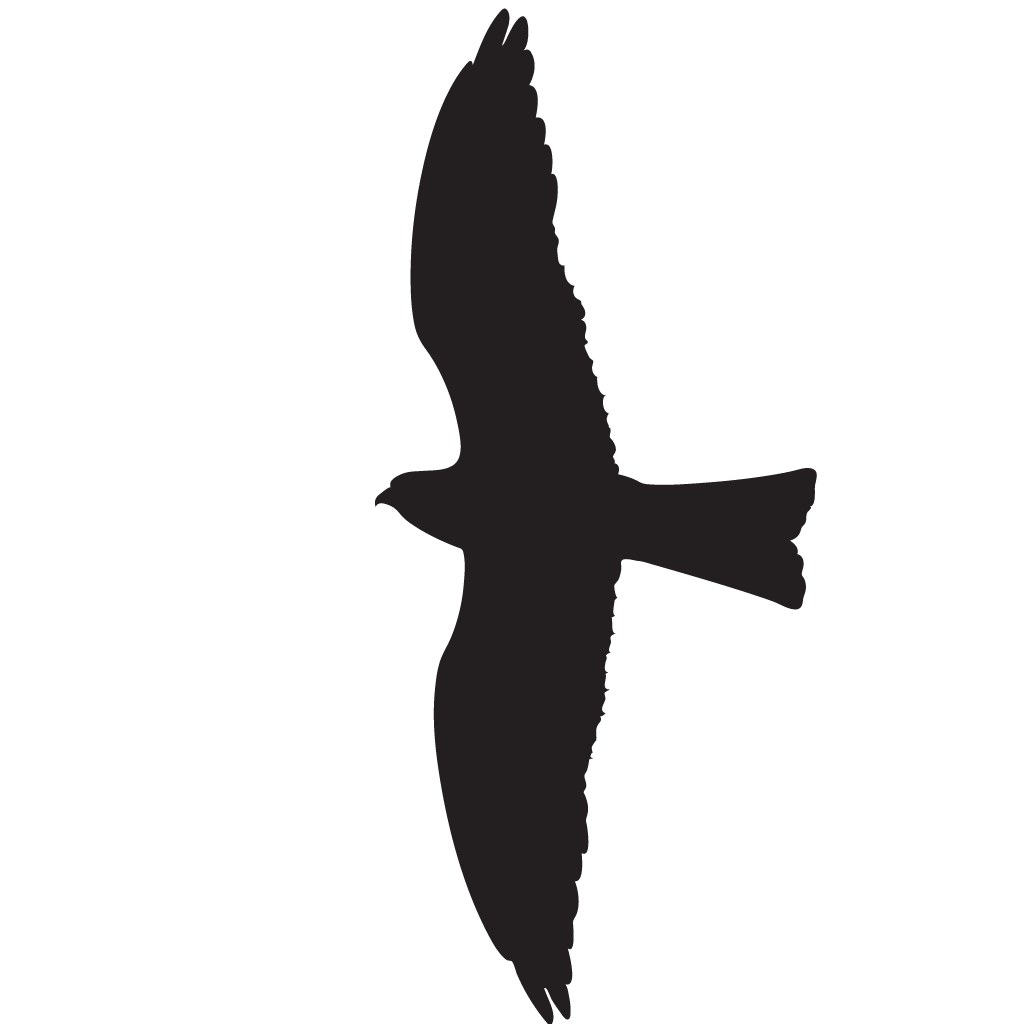 1024x1024 White Tailed Kite Overview, All About Birds, Cornell Lab