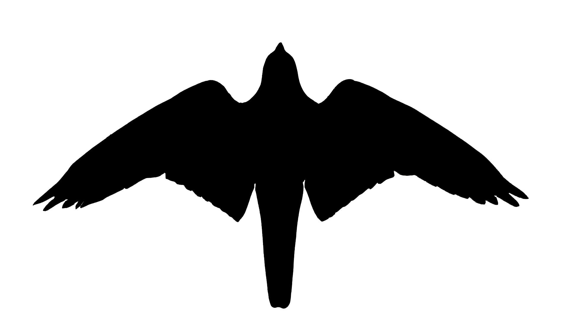 1910x1134 Falcon Silhouette Tattoos Falcons, Tattoo And Tatt