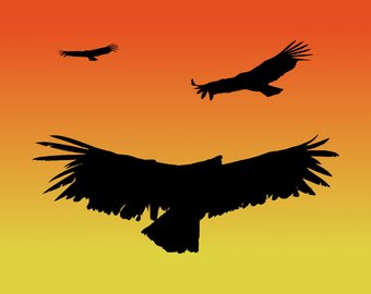 Red Tailed Hawk Silhouette at GetDrawings com | Free for personal