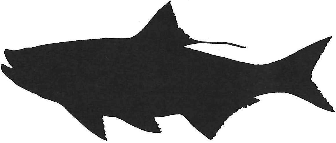1161x496 Saltwater Fishing Reports
