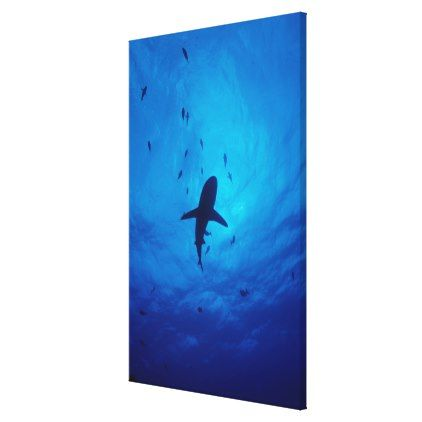 422x422 A Silhouette Of A Grey Reef Shark Canvas Print Shark, Silhouette