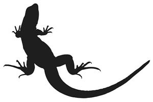 300x200 Lizard Silhouette Sticker Gekko Reptile Love Fun Choose Color Ebay