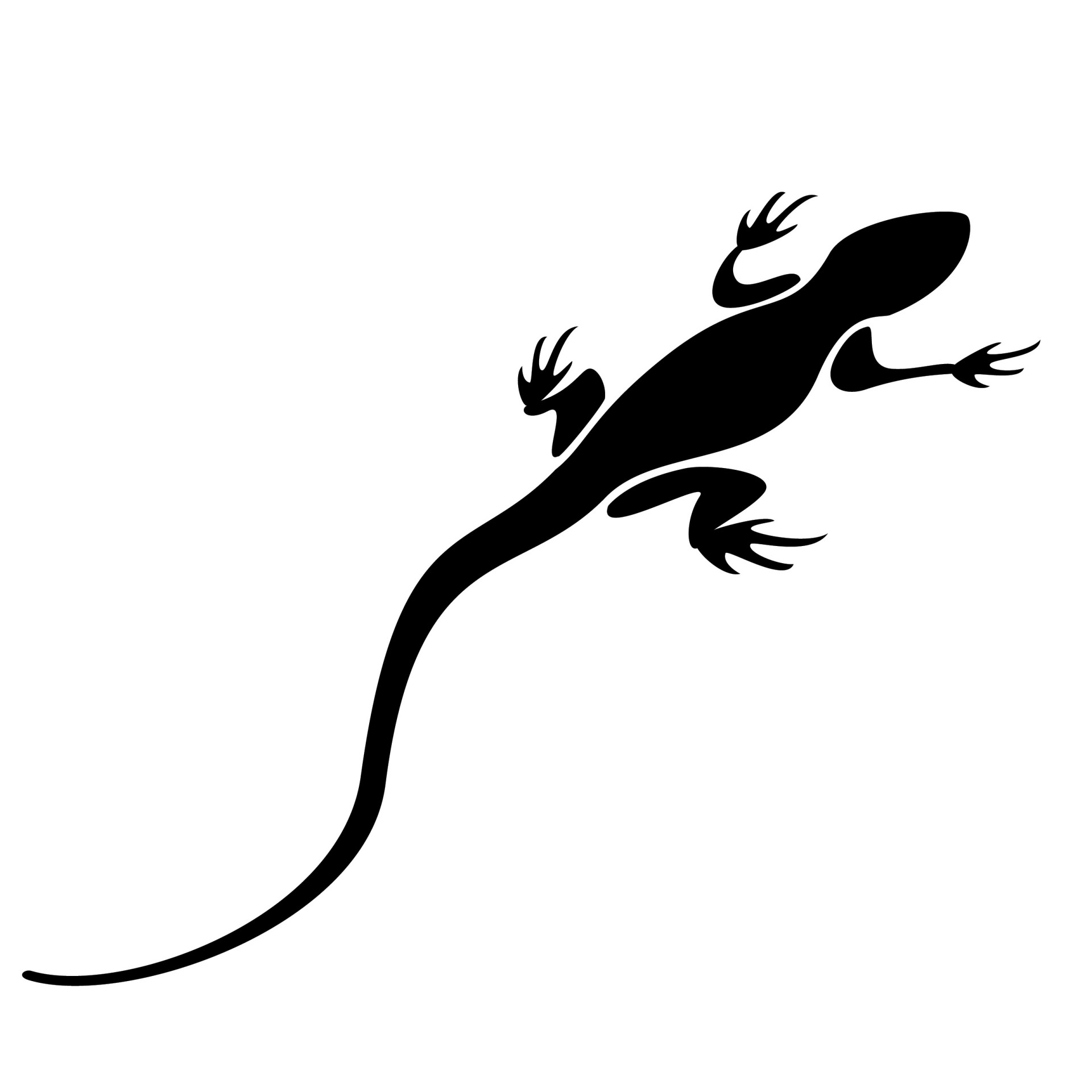 1920x1920 Lizard Black Silhouette Free Stock Photo