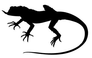 320x203 Lizard Silhouette 9 Decal Sticker