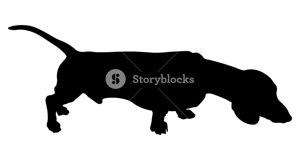 1000x533 Retriever Dog Silhouette Royalty Free Stock Image