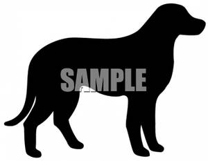 300x233 Of A Labrador Retriever